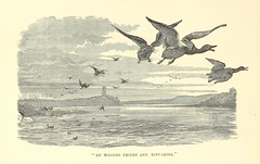 """British Library digitised image from page 30 of """"Wild Adventures in Wild Places"""""""