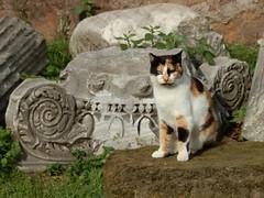 Gatti a Roma