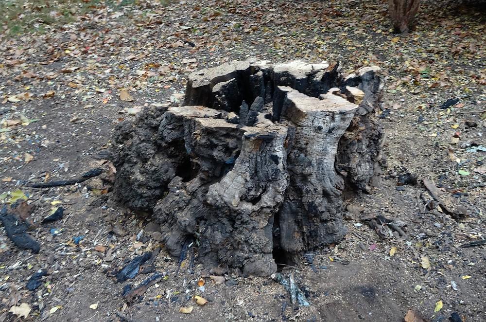 11 7 13 stump