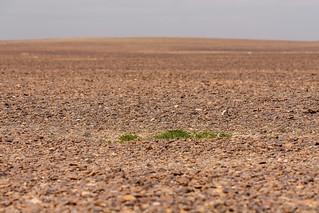 A little green in the Desert