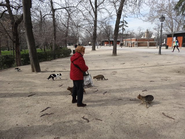 The Cat Lady of Parque Retiro