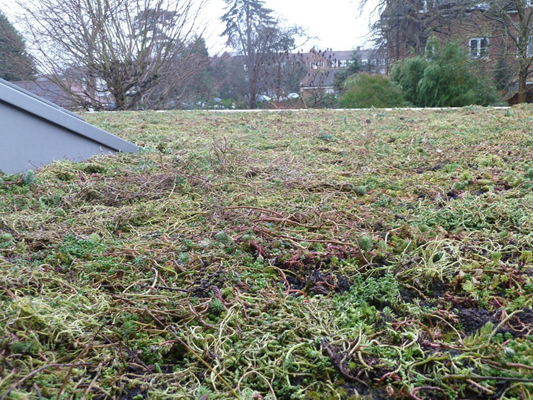 Green roof in winter