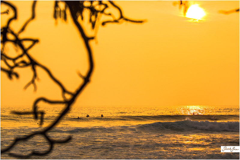 13_Kona_Banyans_Swell_Surf.jpg
