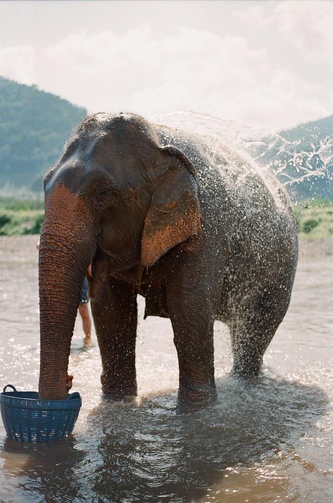 Elephant Nature Park 03