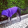 Joe models his American Apparel hoodie... But he can't see anything! #dog #cao #cachorro #viralata #serranegra #saopaulo #brasil #americanapparel
