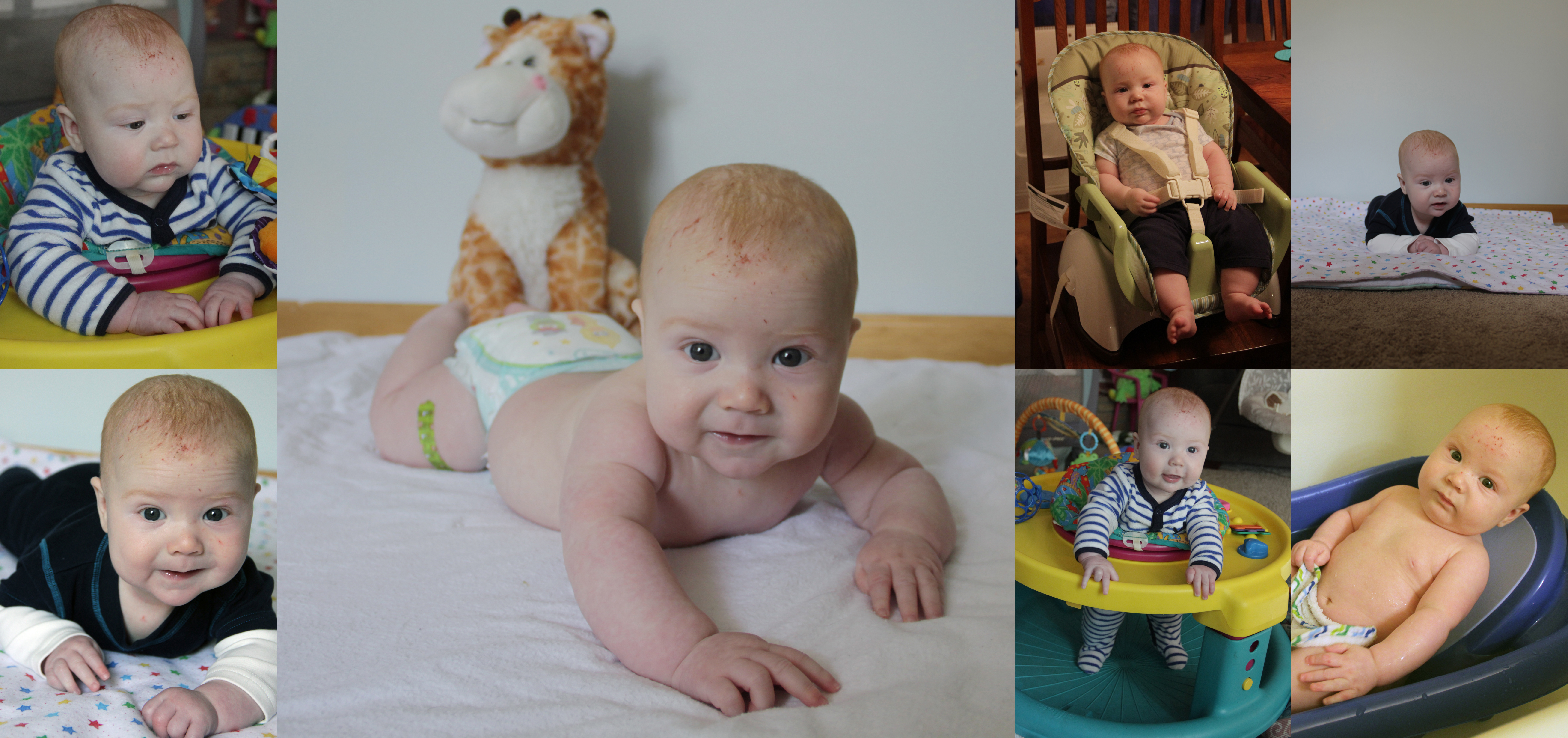 Ryder-4months-collage