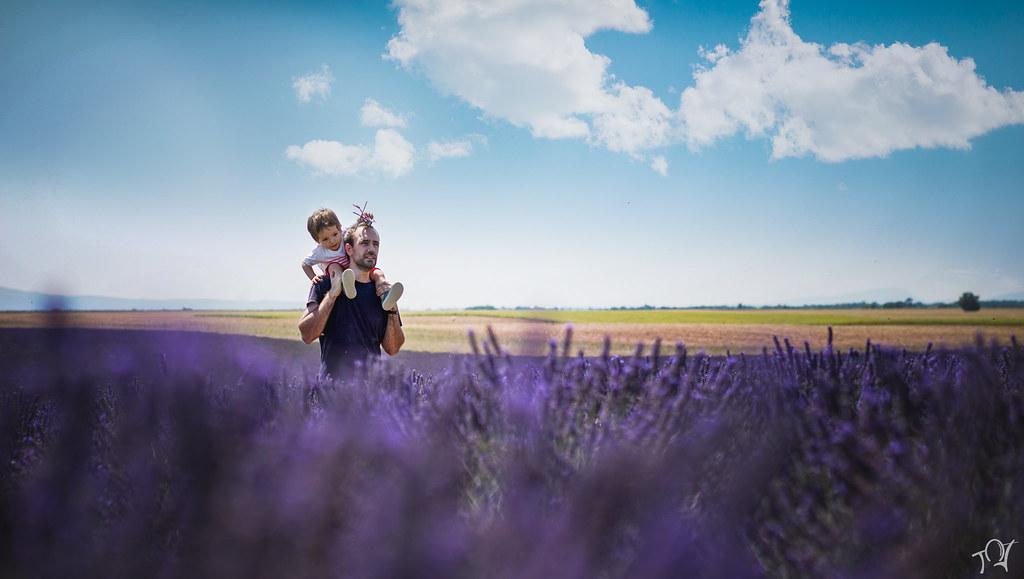 Lavender Family