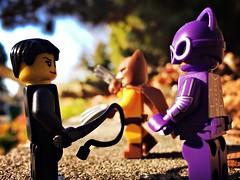 training your catman