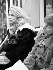 Frauen und Hund