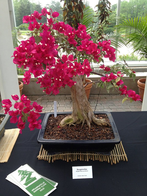 Bonsai Trees As Living Art Center Grove