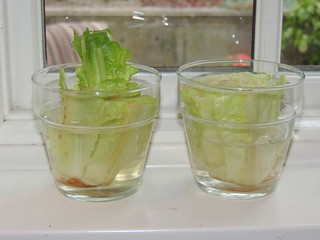 Romaine Gowing in a Glass