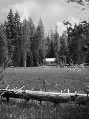 Meadow in monochrome