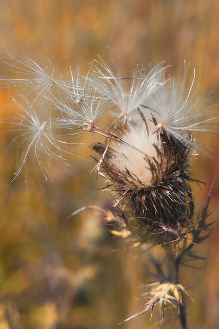Blowing Seeds © 2012 Bo Mackison