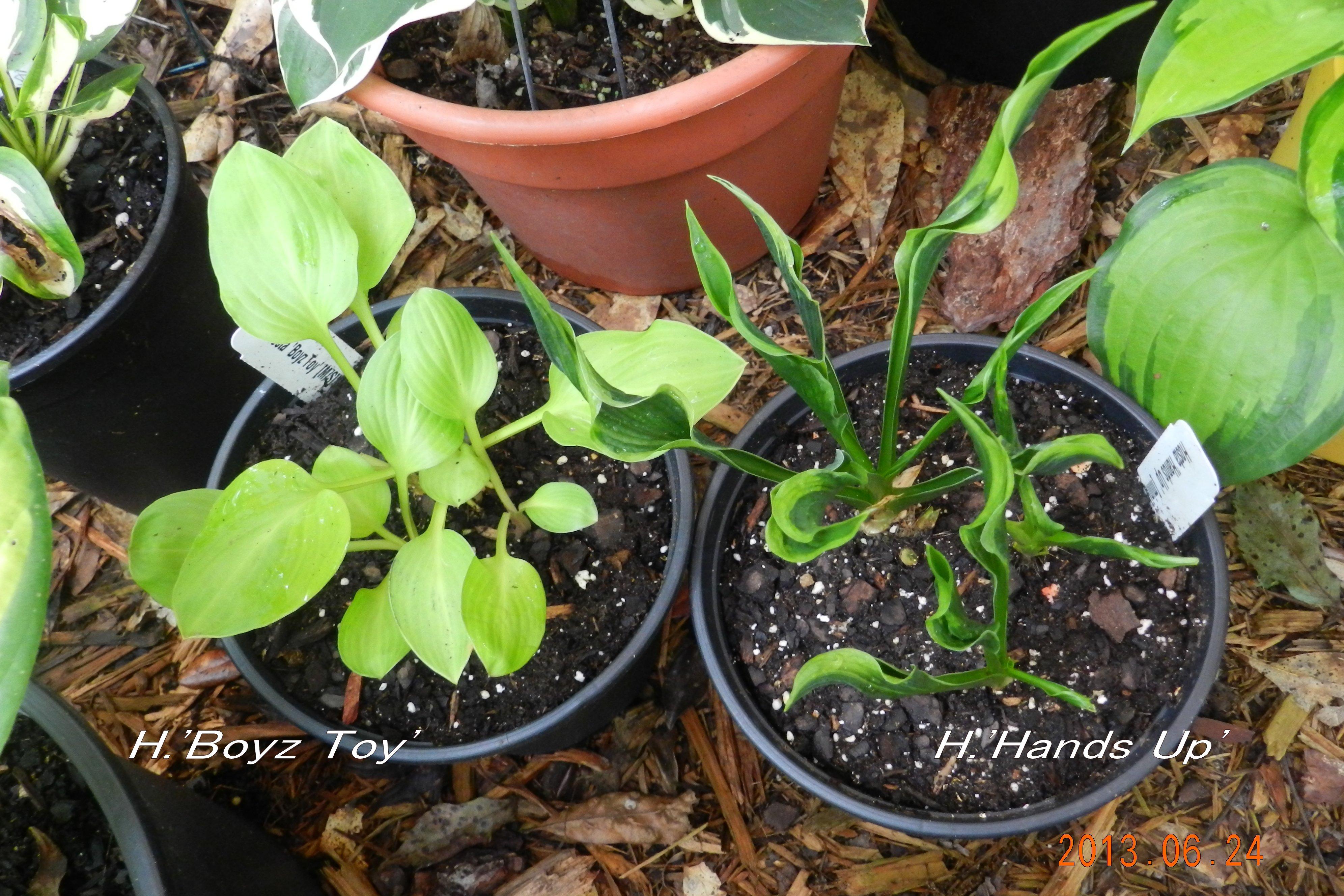 Garden13Jun1065