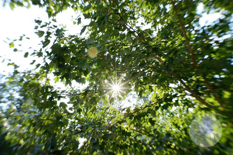 here comes the sun1-web