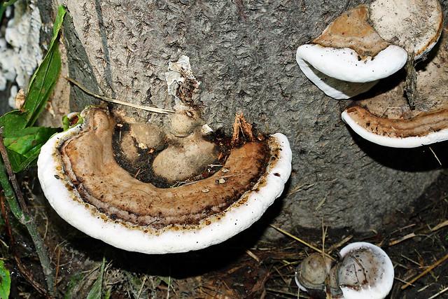 I <3 mushrooms