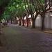 Small photo of Bulevar dos Oitis