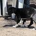 scrappy puppy por Bolt of Blue