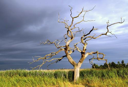 Lightning Tree!