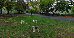 Hardly anyone in the park after the rain