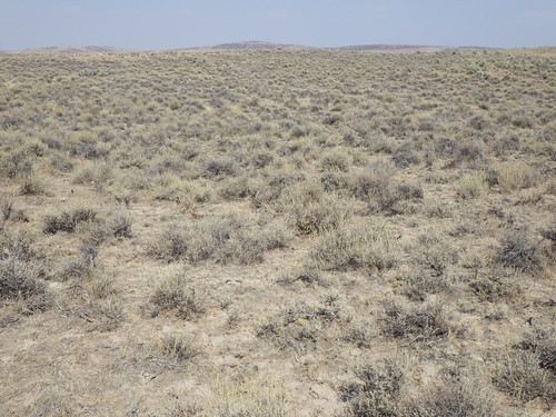 oregon habitat jordanvalley artemisiaarbuscula littlesagebrush agropyroncristatum disturbedsite sagebrushsteppe poasecunda sandbergsbluegrass crestedwheatgras
