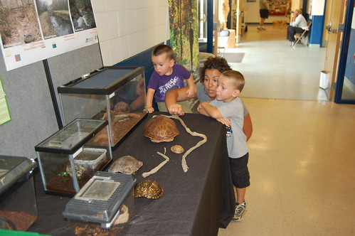children checking out the reptile display at the state fair
