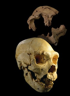 Restos hallados en Atapuerca.