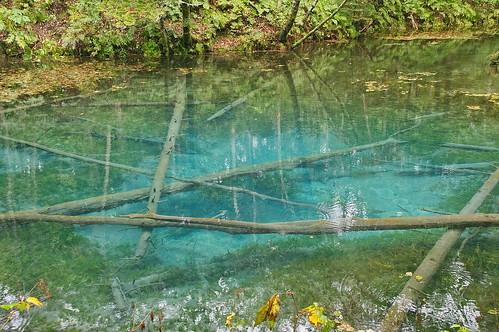【写真】神の子池