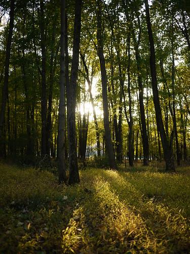 autumn nature newjersey morristown footepark