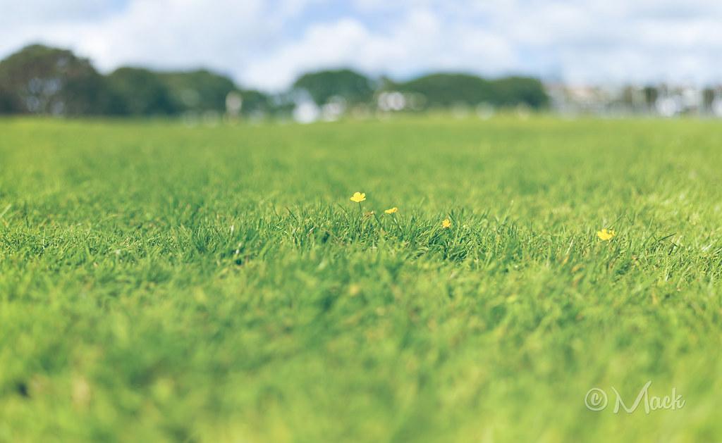IMAGE: http://farm4.staticflickr.com/3692/10301201546_c20a96d60e_b.jpg