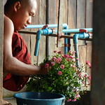 Nga Hpe Chaung - Jumping Cat Monastery flower pot monk 2