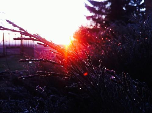 autumn winter tree ice sunrise garden view poland polska zima widok szron uploaded:by=flickrmobile flickriosapp:filter=nofilter piątekmały