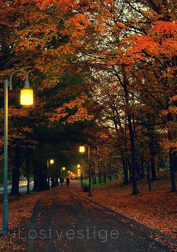 old autumn light fall colors leaves lights photo nc nikon image walk picture salem winstonsalem d5100 lostvestige