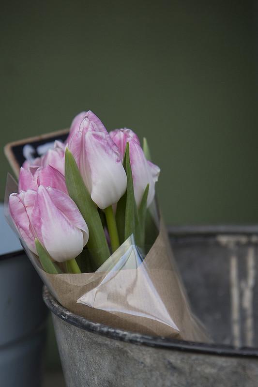 tulips2-web