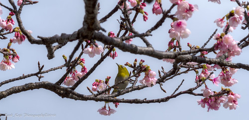 与儀公園 | Naha City, Okinawa #2