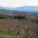 Italy - Tuscan Region