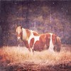 poetry #chincoteague #chincoteagueisland #chincoteaguenationalwildliferefuge #assateague #assateagueisland #wildhorses #wildponies #wildliferefuge #iloveanimals #exploremore #picfx #mextures #madewithfaded #mysticapp