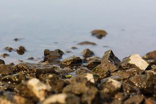 Ufer des Poggensees