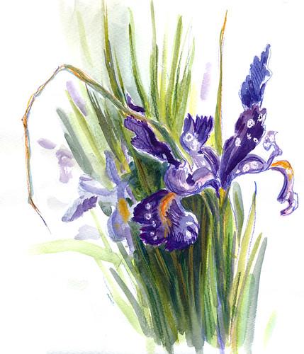 March 2014: Iris