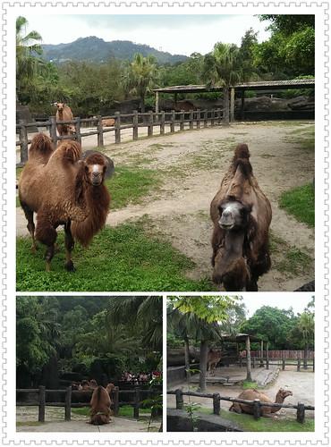 臺北zoo