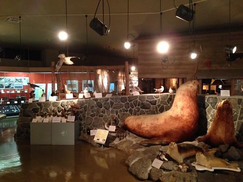 rishiri-island-rishiri-museum-inside02
