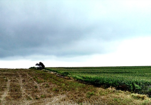 tree field landscape corn ks kansas