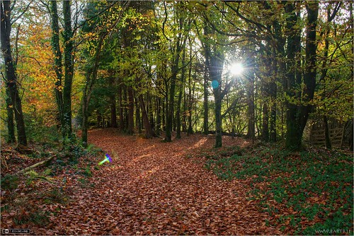 autumn ireland sunburst cavan pathway photomatix tonemapped forestwood topazadjust