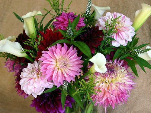 pink-purple-dahlias