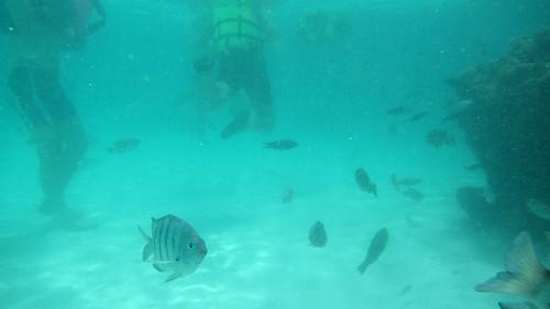 Koh Nangyuan 1day trip ナンユアン島スノーケルツアー (9)
