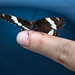 Papillon en camping