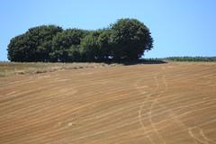 Landscape in France 2013-08-01 01