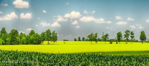 ca trees ontario canada tree clouds rural corn farm farming bluesky panoramic northamerica hay hdr canola rapeseed hatherton georgianbaysouthwestshoredu georgianbaysouthwestshoredundalk hdrefexpro