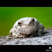 Contentment Tree Frog by Jim Crotty