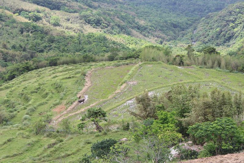 棄耕的水梯田若仍處於旱地或草原,仍有復耕的可能。